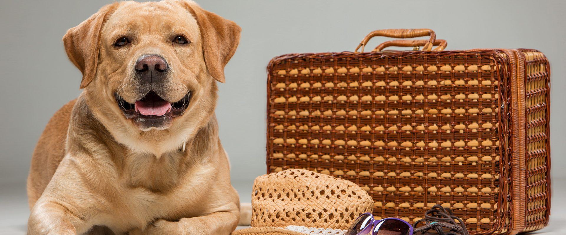 Pet Friendly Accommodations