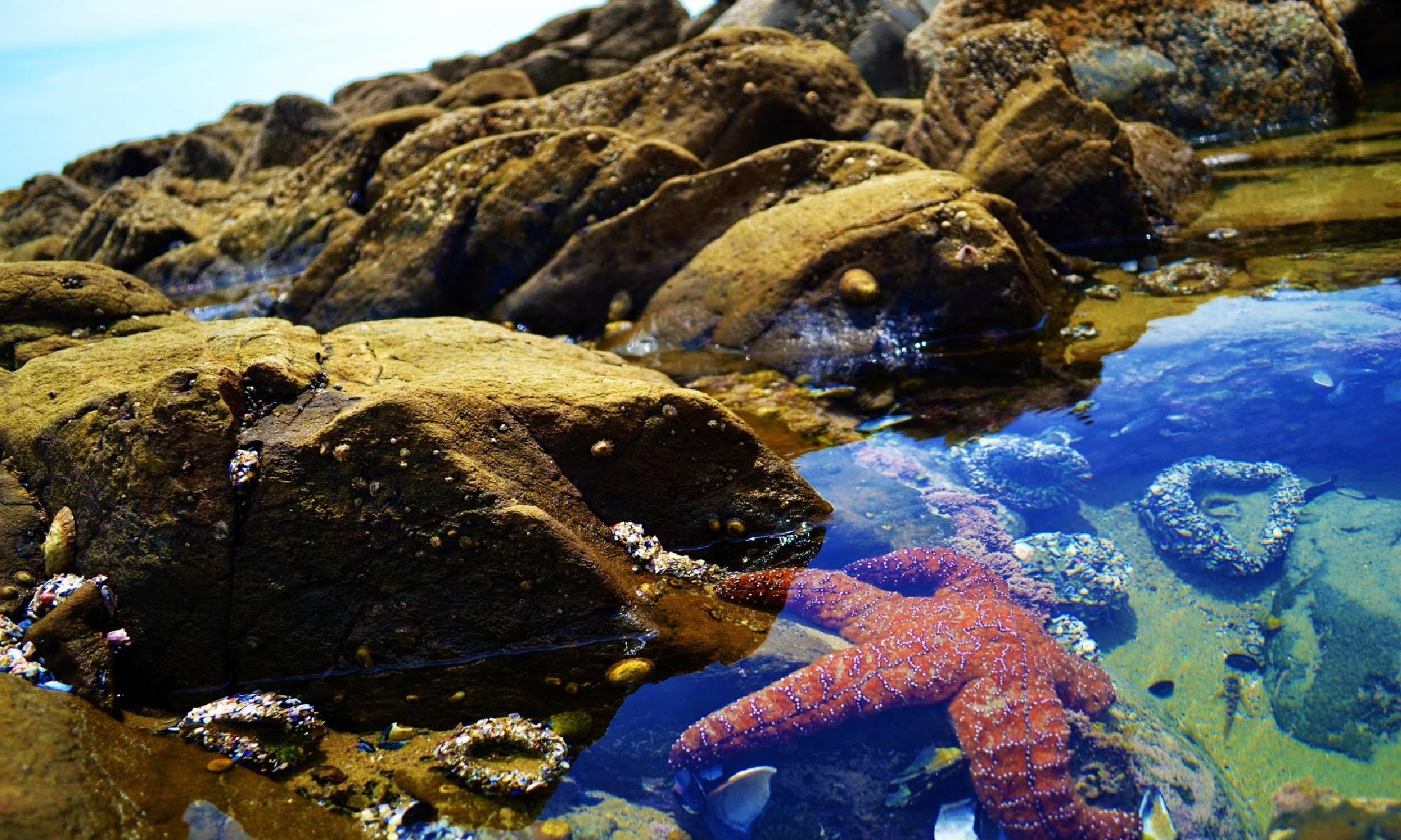 exploring-tide-pools